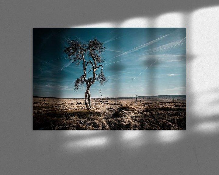 Impression: Hautes Fagnes en couleur - 5 sur Edwin van Wijk