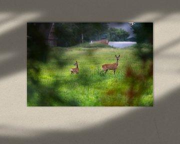 zwei Hirsche auf einer Wiese von Matthias Korn