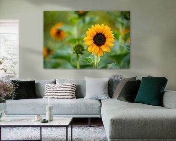 leuchtende Blumen mit ihren Blumen stehen im Mittelpunkt von Matthias Korn