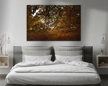 Sonniger und bunter Herbst von Stefan Wiebing Photography