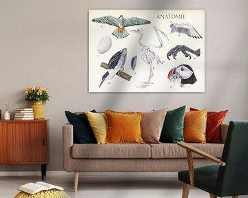 Anatomie van een vogel van Jasper de Ruiter