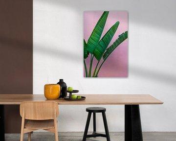 Strelitzia plant, kleurrijke foto print | wall art van Anneloes van Acht