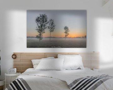 La bruyère naissante sous le soleil du matin sur Roland's Foto's