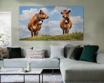 Kühe mit Glocke