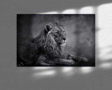 Lion sur Claudia Moeckel