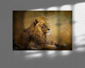 Prachtvoller Löwe von Claudia Moeckel