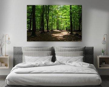Zonlicht in het bos van Corinne Welp