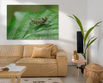 Schorpioenvlieg op een blad van Luis Boullosa