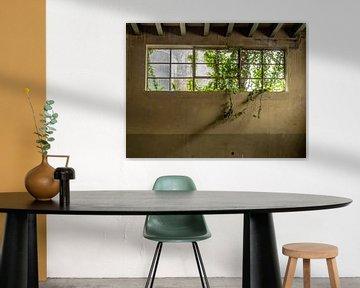 Fenster mit Pflanzen von Martijn Tilroe