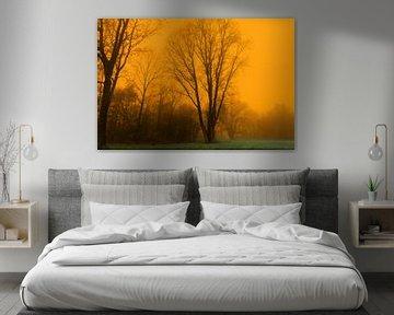 Nebliger Sonnenaufgang im Wald. von Marcel Kieffer