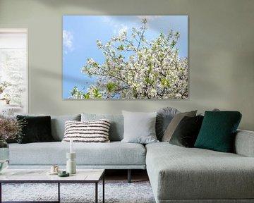 Witte bloesem tegen een blauwe lucht van Evelien Oerlemans