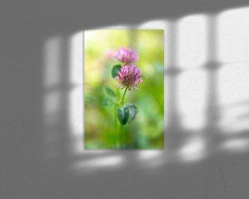 Malerische Blüten in Grün und Rosa von Evelien Oerlemans