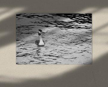 Lappentaucher im Sturm, schwarz und weiß von Nynke Altenburg