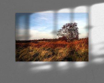 La nature dans les gorges du Dintel sur EauQuai Photography