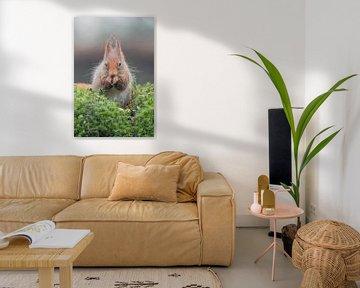 Eichhörnchen von Karin van Rooijen Fotografie