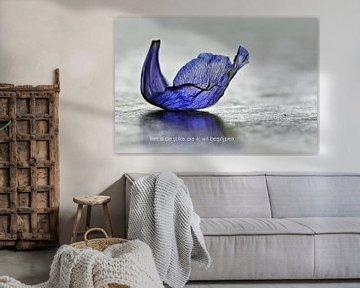 Anemonenblaadje von Bargo Kunst