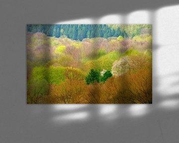 Farben im Frühjahr von Caroline Lichthart