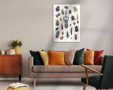 Collage-Käfer in den Niederlanden von Jasper de Ruiter