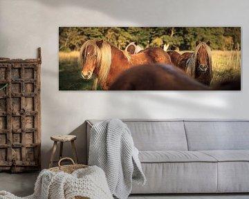 Drei Ponys blicken zurück von Luis Boullosa