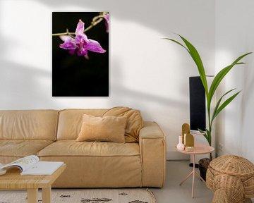 Wilde Orchidee Blume von Luis Boullosa