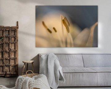 Weiße Amaryllis Nahaufnahme von KB Design & Photography (Karen Brouwer)