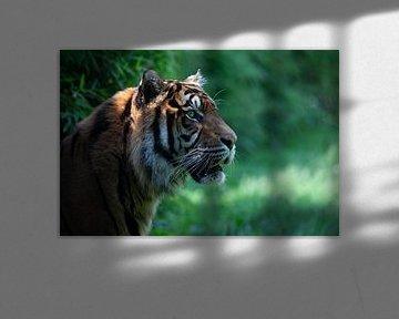 Tiger von Anne-Marie Vermaat