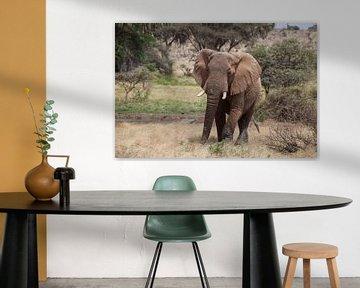 Elefant von Anne-Marie Vermaat