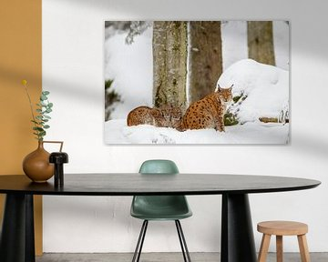 Luchse im Schnee von Dirk Rüter
