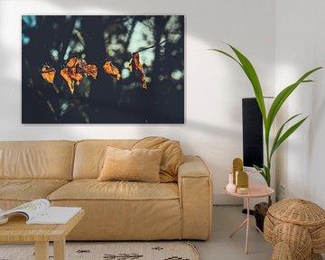 Herfstbladeren in de zon van Maarten Mooijman