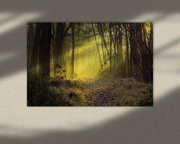 Magie in het bos van Stephan Krabbendam