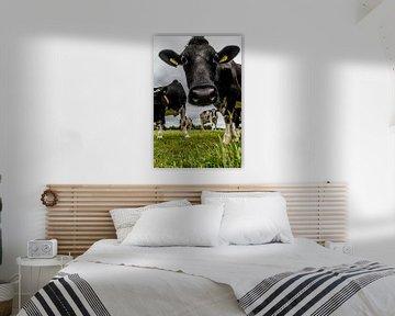 Kühe auf der Wiese von SRF