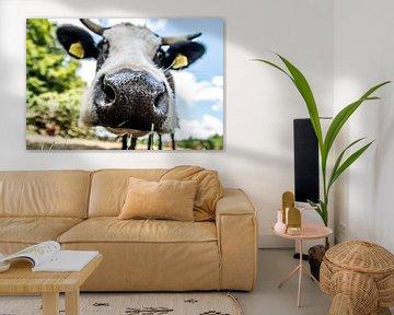 Kuh auf der Wiese von SRF