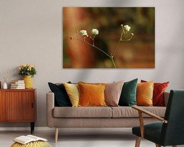 Gipskraut aus einem Blumenstrauß von Pim van der Horst