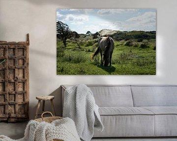 Konikpaard in de Kennemerduinen van Femke Looman