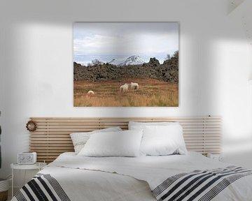 Kussende schapen van Hannon Queiroz