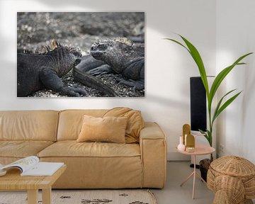 Leguane auf den Galapagosinseln von Femke Looman