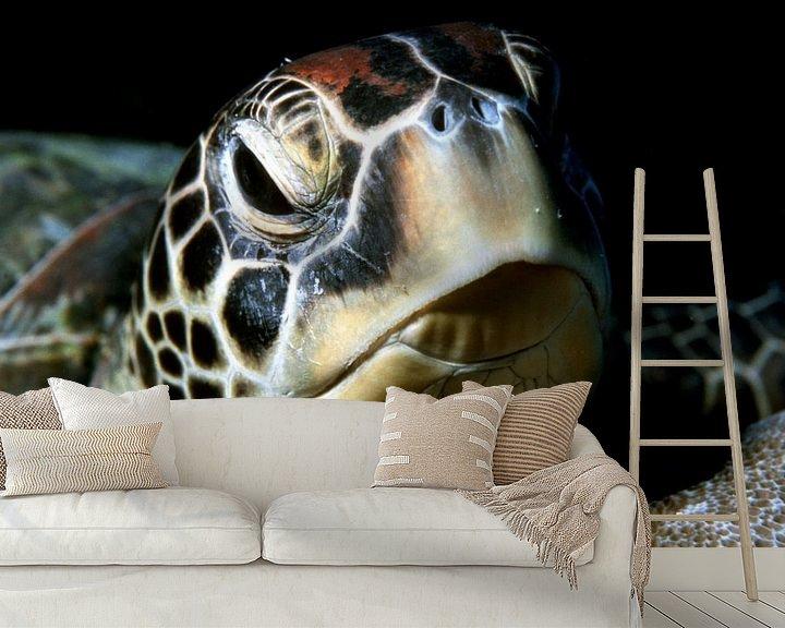 Beispiel fototapete: Meeresschildkröte (grüne Schildkröte) von Alexander Schulz