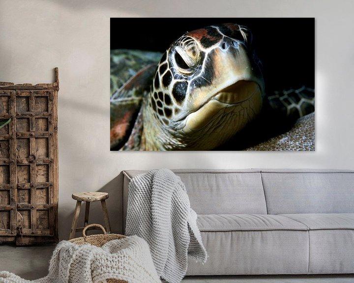 Beispiel: Meeresschildkröte (grüne Schildkröte) von Alexander Schulz