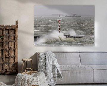 Storm Bella van Linda Raaphorst