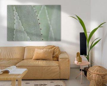 Nahaufnahme der Struktur auf Agavenblättern von Krijn van der Giessen