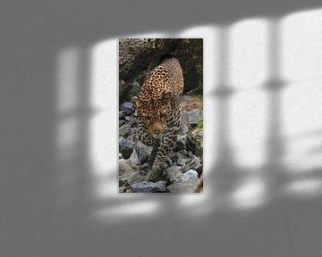 Gepard auf der Jagd von Michelle Boumon