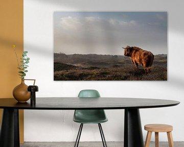 Stier Schotse hooglander op de uitkijk van Bas Ronteltap