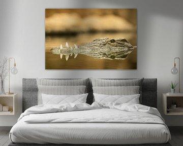 Krokodil auf der Hut im Wasser von Wouter van Agtmaal