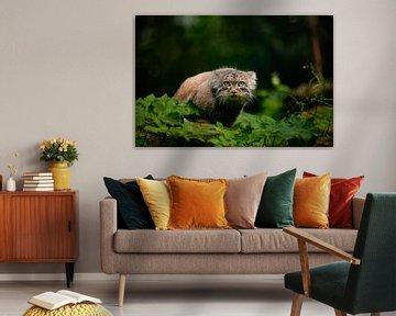 Neugierig Manoel (Pallas Katze) von Wouter van Agtmaal