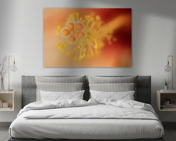 Hibiscus sur Patrick Brouwers