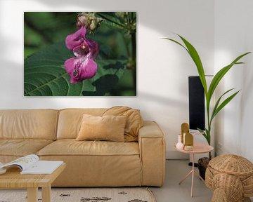 Orchidee wie Blume Asseradepad von Annie Lausberg-Pater