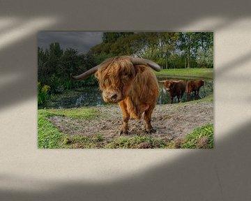Schottische Highlander