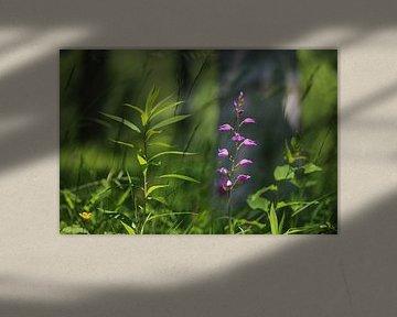 Wilde orchidee Rode bosvogel van Ines Porada