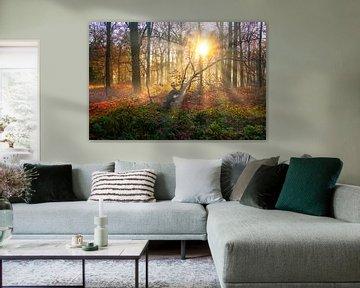 Zonsopkomst in een herfst bos van MPhotographer