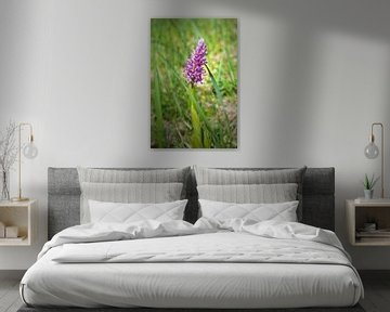 Orchideeënhelm orchidee van Ines Porada